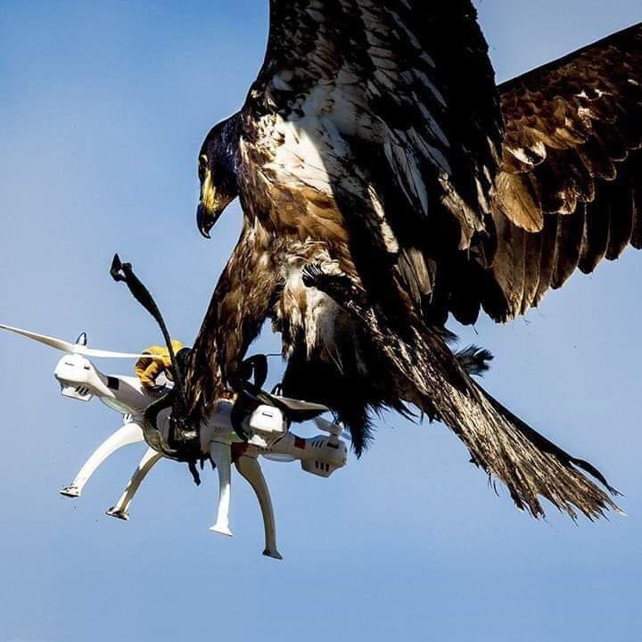 Dron na